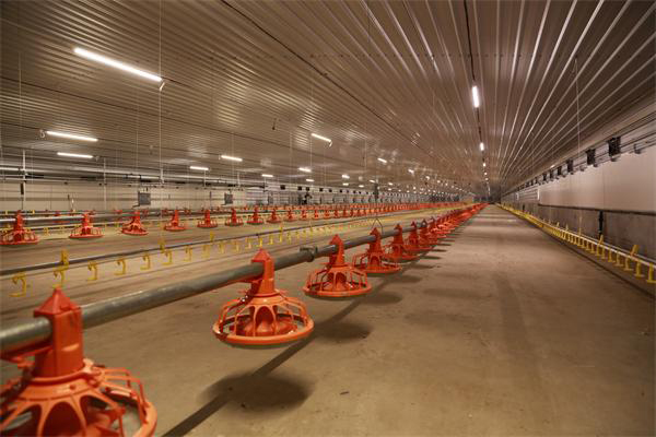 Poultry Lighting System | LED Poultry House Light