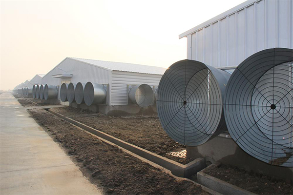 Poultry Climate Control System Poultry Farming